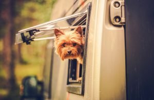 Dog Friendly RV Motorhome Hire